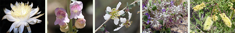 Southeastern Arizona Fragrant Flowers and Plants