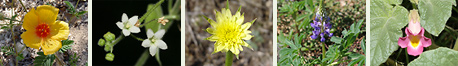 Southeastern Arizona Annuals