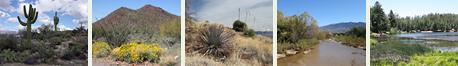 Southeastern Arizona Habitat