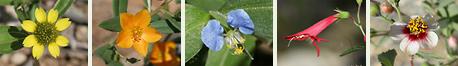 Southeastern Arizona Plant Family