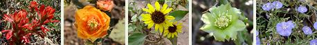 Southeastern Arizona View Plants